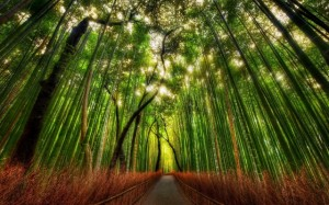 Bambous-chemin